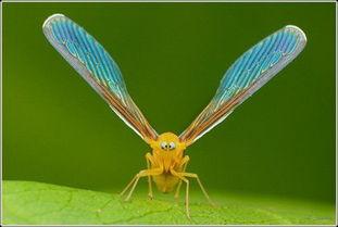 虫来的修界-最近的昆虫界流行 斗鸡眼
