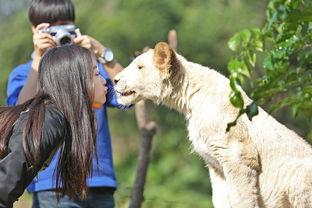...动物亲密接触的真人秀节目《奇妙的朋友》将于1月17日晚22:00首播...