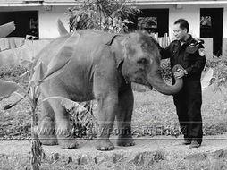 古罗马肉笔-他们曾经有人在勘查现场时被大象的尸毒感染,双手溃烂发臭;有人在...