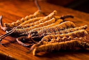 冬虫夏草怎么吃最好 冬虫夏草的营养价值