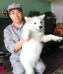 ,罗先生到番禺清河肉菜市场,一只白色的狗在雨中被淋得浑身湿透....