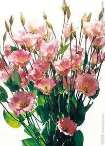 ...花瓣 粉色花 一束花图片