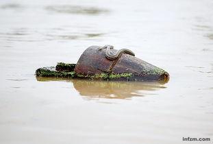 一条蛇盘在木桶上随水飘流. (浦峰/图)-洪水众 牲 相