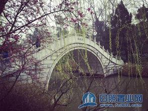 杨柳穿花玉版桥-烟花三月 日照置业网大家庭游扬州啦