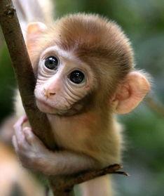 ...萌猴 图:新浪图库-五一去野 让假期飞十二星座旅行愿望单 8