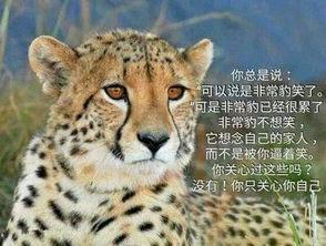... 可以说是非常豹笑了. 你总是说:-表情 豹哭 海豹表情包 海豹哭 豹...