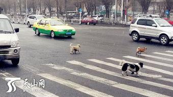 ... 流浪狗下雪天横穿马路 司机紧急避让