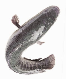 怎样让上浮的鱼食快速下沉