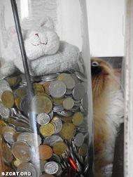 谜男方法猫绳-...宠物 pet cat dog 狗 伴侣动物 民间组织 生态 动物福利