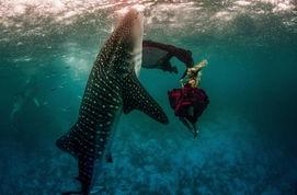 海底视觉盛宴 超模与鲨鱼惊艳共舞