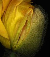 阴茎入珠真实照片-...女性阴部美图(图片来源:人民网)-女性阴部美图 让你想象不到的...