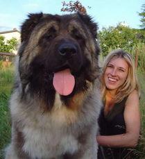母犬大约每年生育一次或者每八到十一个月.母犬多数在秋天在野外的...