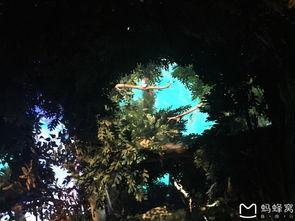 上海迪士尼的疯狂之旅