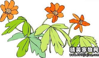描写槐花的优美句子