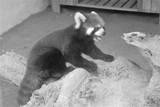 杭州 熊孩子 越狱后逛西湖被抓回 半年瘦了2斤