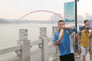 昨日,记者邀请华中农业大学水产学院博士王哲一同实地踏访,印证事...