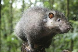 博狗bf88-2009 年,一个由英国、美国以及巴布亚新几内亚科学家组成的探险组...