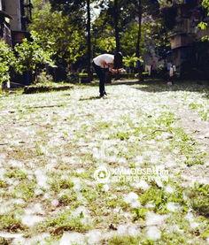 槟榔西里 六月飞雪 木棉树飘棉絮居民很困扰