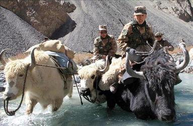...谷 骑牦牛穿山过河