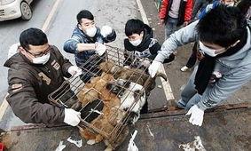 自愿被屠宰吃肉的许明梯-英国《卫报》6月18日发表文章,原题:中国城市因狗肉节挨批在中国...
