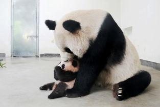 上海野生动物园驴妈妈会员日成人喂食劵 7.16 7.17出游