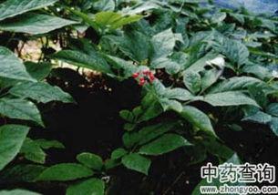 PS调整偏色的植物图片
