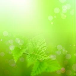 高清淡绿色背景图片下载