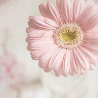 qq带花的女生头像