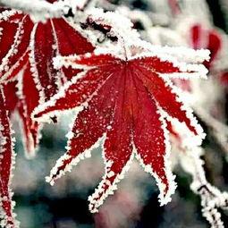冰封,有凛冽的寒风,最有冬天的味道!