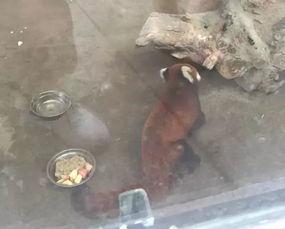杭州 熊孩子 越狱半年,逛西湖被抓 组图
