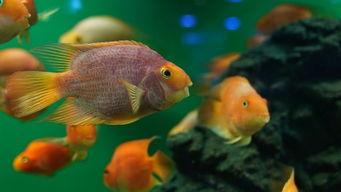 紫枯鱼人-我喜欢看鱼,但是并不喜欢吃.鱼这东西,感觉就算是同样一个品种,...