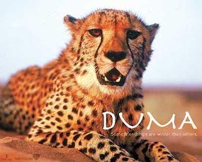 动物电影领域,法国独霸天下 一人一豹 纵横非洲