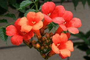 夏天开什么花 这些植物都在夏季开花