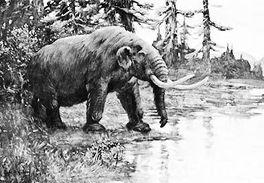 ...前北美史前巨兽灭绝并非因为印第安人捕杀