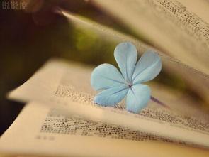 忧伤的句子说说心情 没有一见钟情的资本,少了日久生情的条件