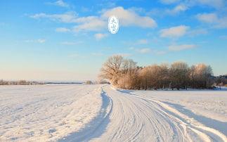 ...6年12月7日大雪节气 谁才是真正的雪界大哥