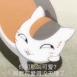 那我可爱得没天理了 你们那叫可爱?-表情 猫咪老师表情包下载 猫咪老...