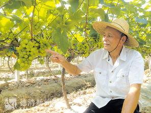 他毅然放弃悠闲的养老生活,干起了农民的老本行-一位退休老人的7年 ...