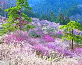 木,每年的三到五月间,杏花、桃花、丁香、牡丹依次盛开.沿湖的绿...