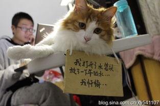 ...忙送猫季 不同的幸福之路