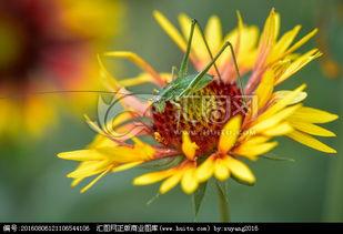 花上长小白飞虫是撒虫-微距花虫