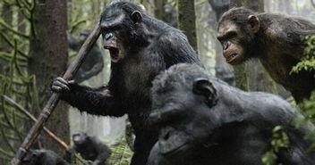 命运令人惋惜的类人猿——凯撒的故事.凯撒本是一个老年痴呆症药物...