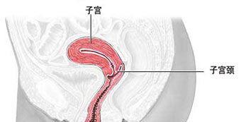 宫颈的位置 图解