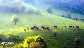 9月7号关山牧场草原休闲 骑马两日游