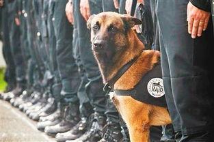 法国警犬反恐殉职 将获英 动物英雄 最高奖勋章