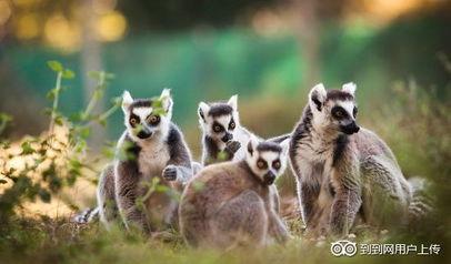 Zoo de Labenne(Labenne)-阿基坦大区动物园和水族馆 TripAdvisor 官...