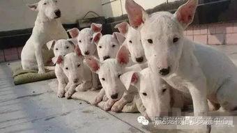 世界十大最贵名犬 狗狗的身价排行榜