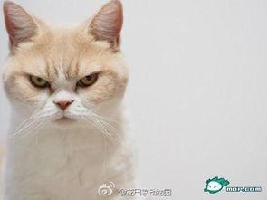 怒颜猫小雪