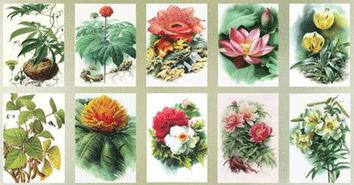 植物科学画家曾孝濂 从一而终 只为描绘生命