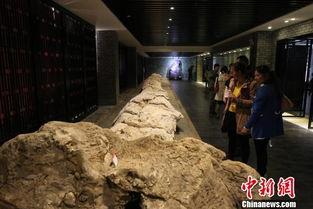 大理南诏地质博物馆开展 全球最大海百合化石首亮相